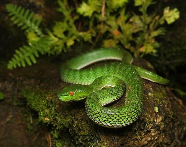 Nằm mơ thấy rắn vào nhà đánh con gì, số mấy dễ trúng lô?