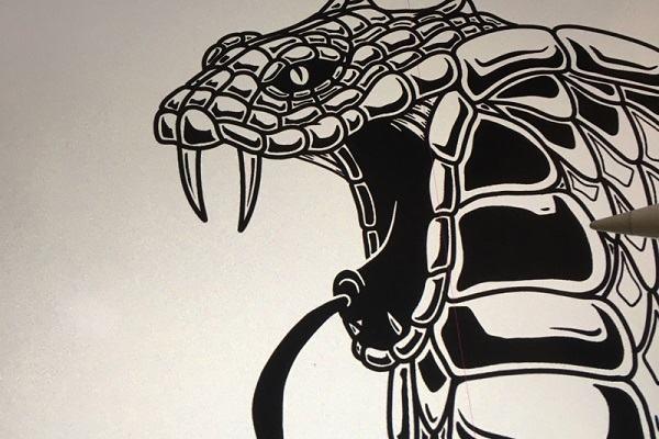 Các loài rắn độc nhất Thế Giới và Việt Nam bạn nên biết để tránh - Cách xử lý khi bị rắn độc cắn