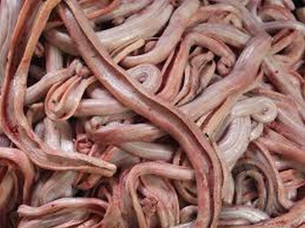 Ngủ nằm mơ ăn thịt rắn sống không cần nấu chín