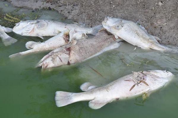 Nằm mơ thấy mình bị một con cá lớn, cá khổng lồ tấn công