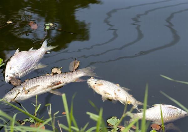 Nằm mơ cá chết có điềm báo ra sao?