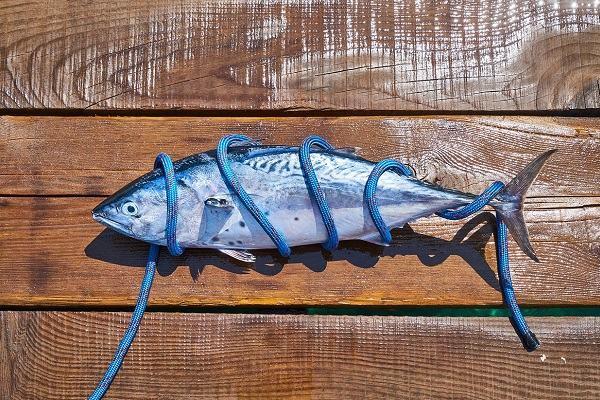 Nằm mơ thấy cá chết có ý nghĩa gì | Giải mã giấc mơ thấy cá chết đánh con gì