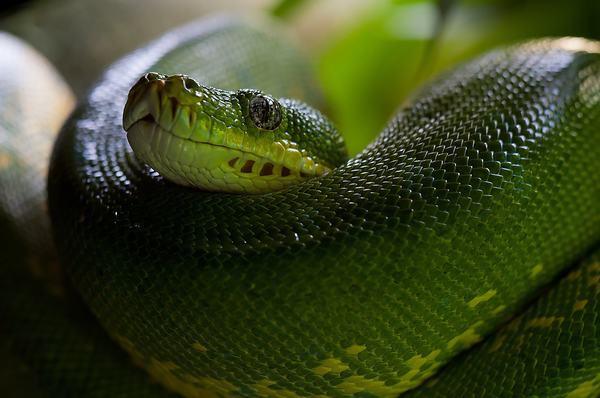 Kiến thức về loài rắn trong tự nhiên
