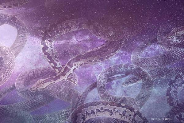 Ngủ nằm mơ thấy giết rắn hay thấy người khác giết rắn đánh con gì và báo điềm gì?