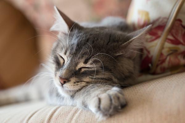 Mơ thấy mèo chết là mèo con