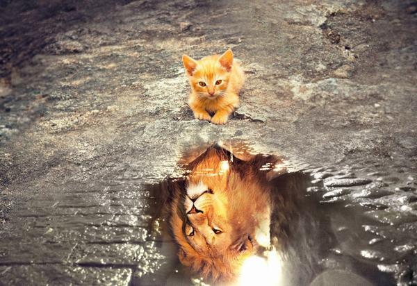 Nằm mơ thấy mèo chết có ý nghĩa gì?