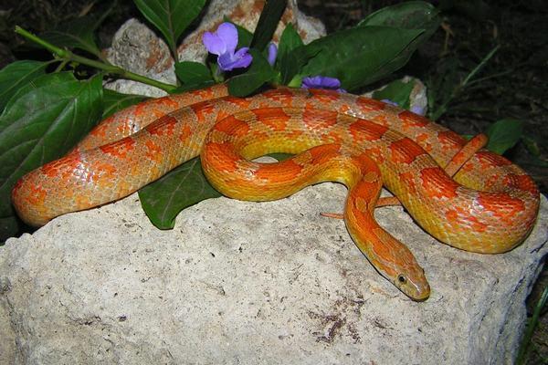 Nằm mơ thấy rắn đỏ đánh con gì, số mấy dễ trúng đề?