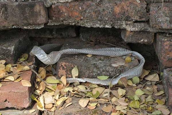 Nằm mơ thấy rắn lột xác, lột da đánh con gì | Giải mã giấc mơ thấy rắn lột xác đầy đủ