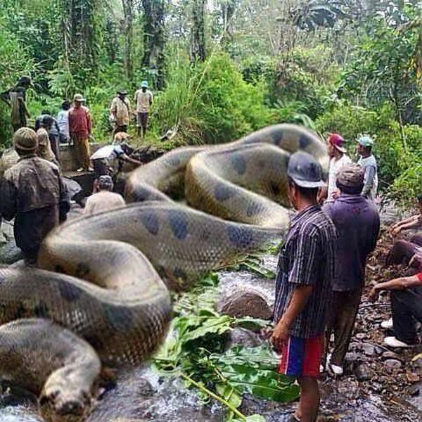 Nằm mơ thấy rắn to khổng lồ là điềm gì?