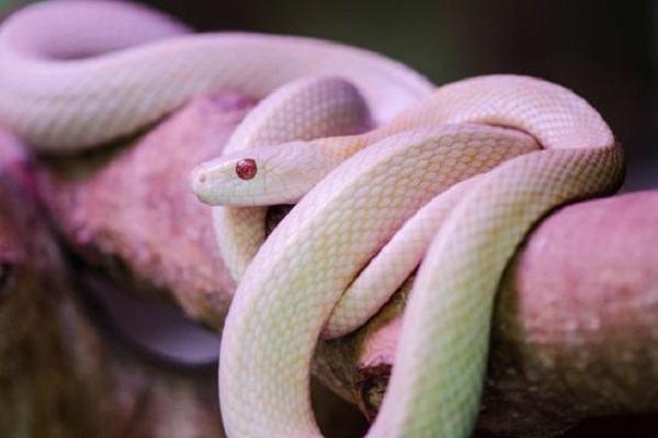 Nằm mơ thấy rắn trắng đánh con gì | Giải mã giấc mơ thấy rắn màu trắng báo điềm gì?