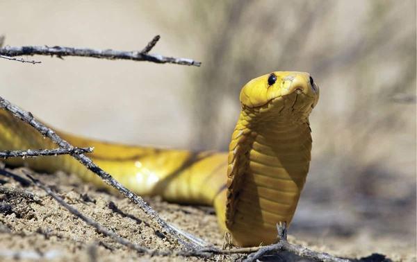 Nằm mơ thấy rắn vào nhà là điềm gì?