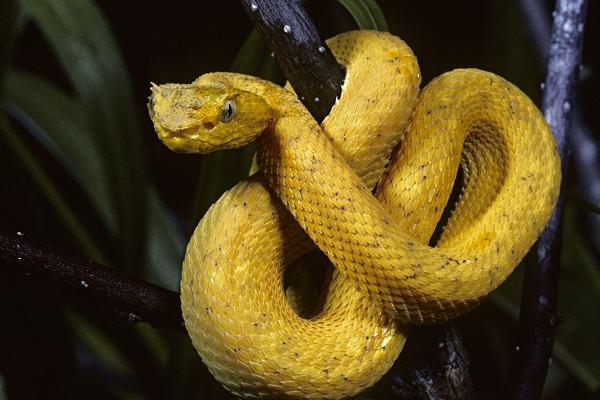 Nằm mơ thấy rắn vàng đánh con gì | Giải mã giấc mơ thấy rắn màu vàng và những điềm báo