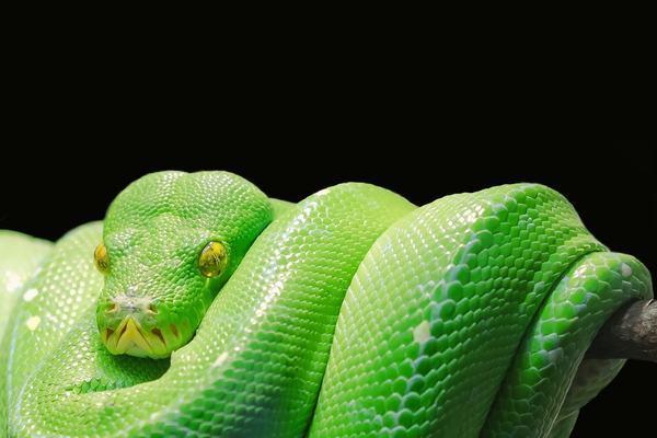 Nằm mơ thấy rắn xanh đánh con gì, số mấy dễ trúng?