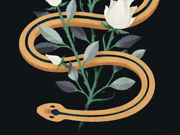 Thấy rắn bò vào nhà nên đánh con gì?
