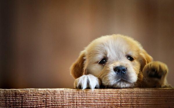 Chó vào nhà ngày mùng 1 đầu tháng