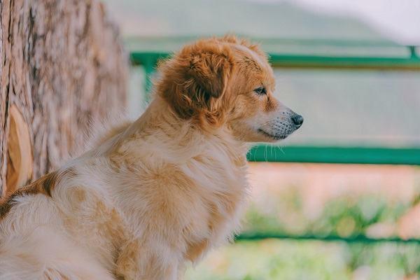 Chó vào nhà là điềm gì | Giải mã hiện tượng chó vào nhà ở, vào nhà đẻ hên hay xui