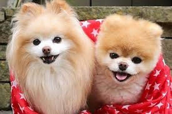 Nằm mơ thấy 2 con chó, 3 con chó đánh số gì | Giải mã giấc mơ thấy hai ba con chó báo điềm gì?