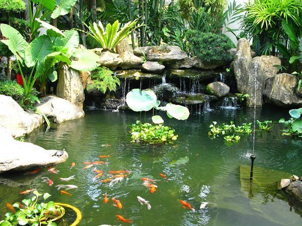 Nằm mơ thấy ao cá Koi với nhiều màu sắc đẹp