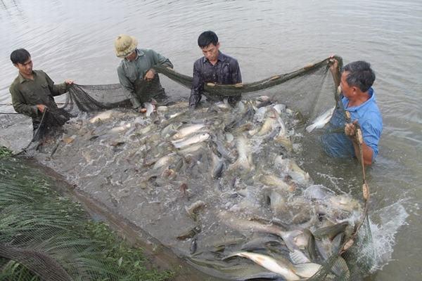 Chiêm bao thấy bắt cá, câu cá trong ao