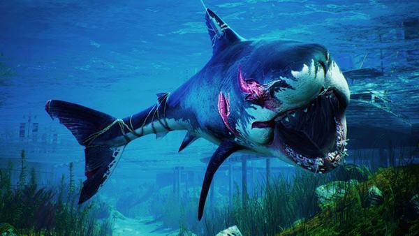 Nằm mơ thấy mình bắt cá mập
