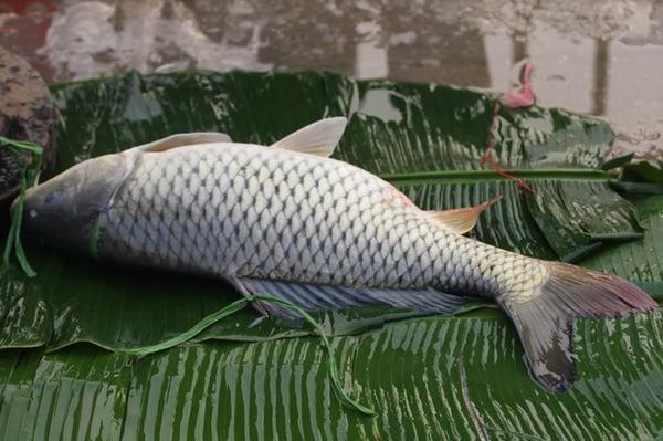 Nằm mơ thấy bắt cá đánh con gì, liên quan đến con số nào?