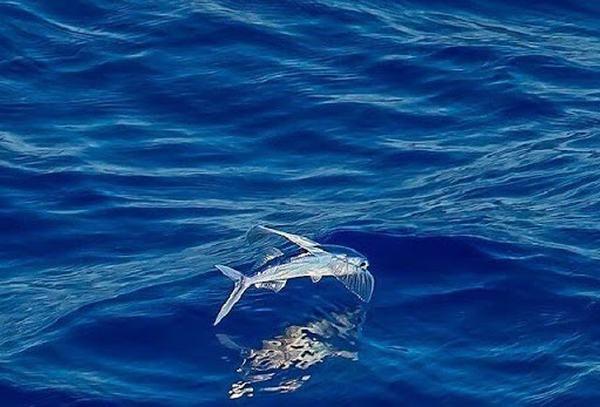 Nằm mơ thấy cá biết bay trên trời là điềm tốt hay xấu ?