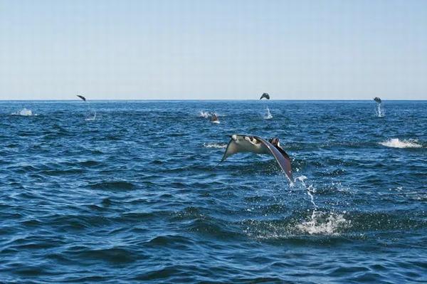 Nằm mơ thấy cá biết bay đánh con gì?