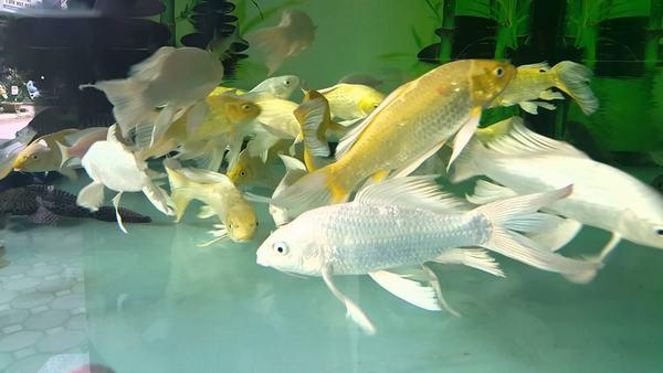 Nằm Mơ Thấy Cá Và Nước Là Điềm Gì & 8 Giải Mã Điềm Báo