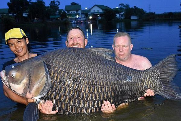 Nằm mơ thấy cá chép đánh con gì   Giải mã giấc mơ thấy cá chép là điềm gì?