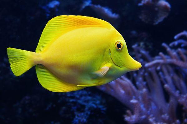 Nằm mơ thấy cá đánh con gì, số mấy chính xác?
