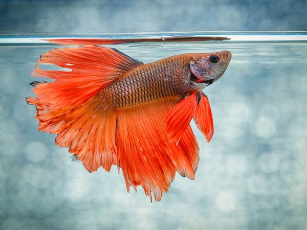 Cá là biểu tượng của sự đa dạng, đủ đầy nhưng lại bị thống trị và kiểm soát bởi con người