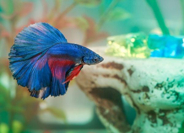 Nằm mơ thấy cá nhỏ