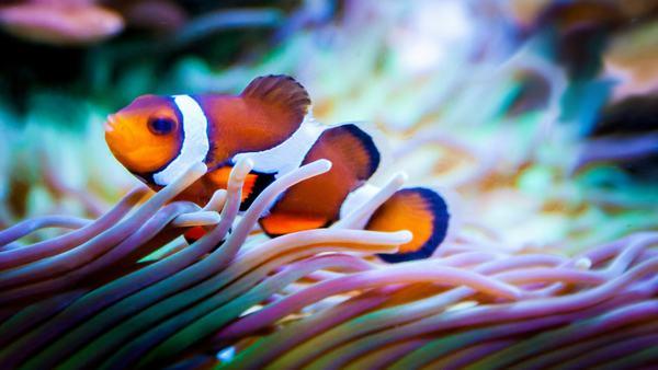 Nằm mơ thấy cá và nước, cá bơi lội trong nước