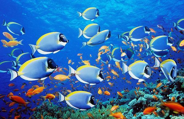 Nằm mơ thấy cá chết đánh con gì?
