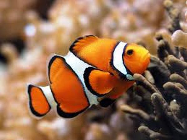 Nằm mơ thấy Cá Rô có ý nghĩa gì?