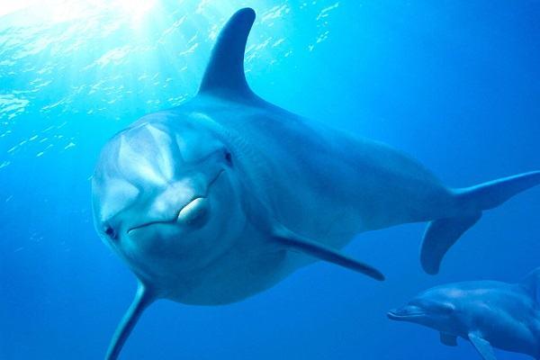 Nằm mơ thấy cá heo đánh con gì   Giải mã giấc mơ thấy cá heo và các điềm báo tốt xấu