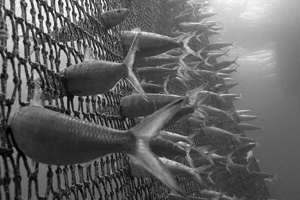Nằm mơ thấy cá mắc lưới đánh con gì   Giải mã giấc mơ thấy đi lưới cá