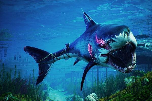 Nằm mơ thấy cá mập đánh con gì | Giải mã giấc mơ thấy cá mập cắn người báo điềm gì?