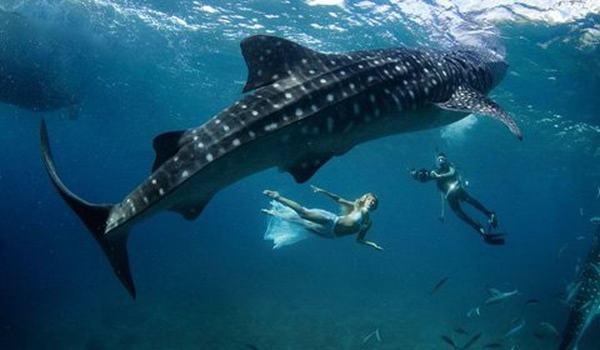 Nằm mơ thấy cá lớn màu đen