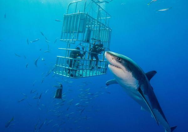 Tại sao mơ thấy cá mập?