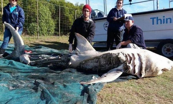 Trong giấc mơ bắt gặp con cá lớn bị chết