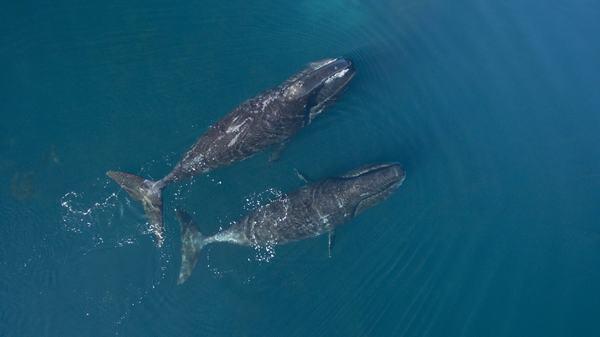 Nằm mơ thấy cá voi bị cá khác tấn công