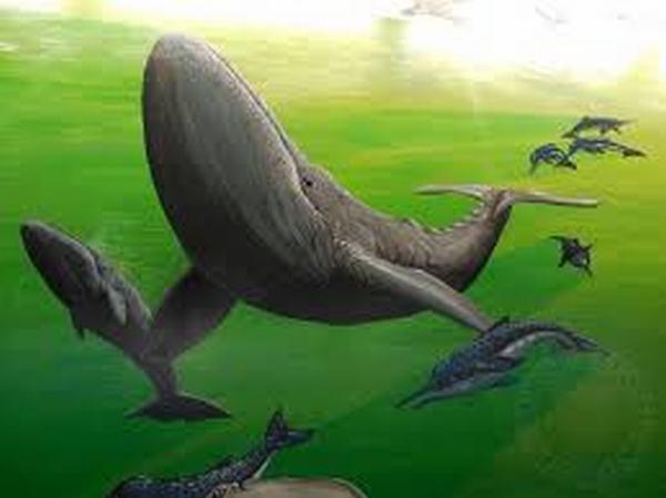 Ngủ mơ thấy có nhiều cá voi bơi theo bầy