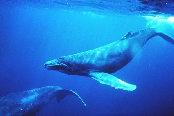 Nằm mơ thấy cá voi đánh con gì | Giải mã giấc mơ thấy CÁ VOI