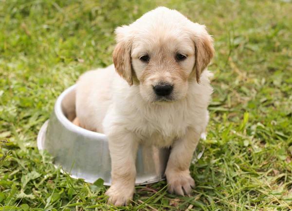 Chó vào nhà nên đánh con số gì?