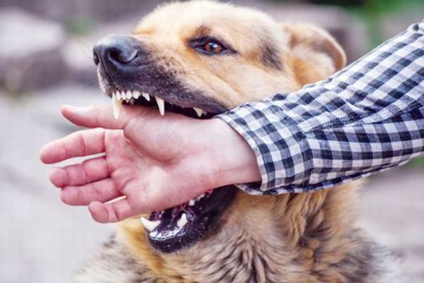 Nằm mơ bị chó cắn vào tay đánh con gì tài lộc nhất?