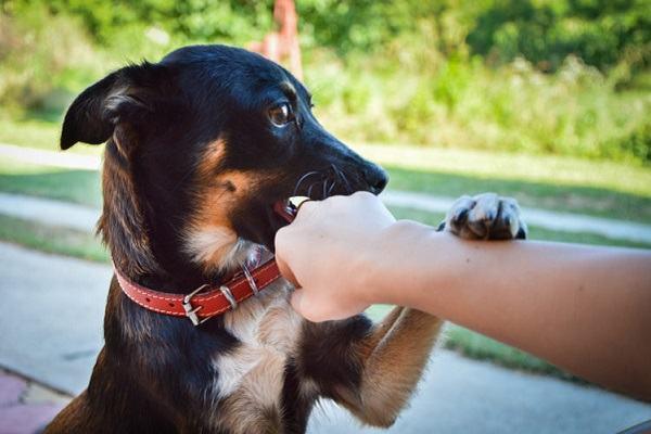 Nằm mơ thấy chó cắn tay đánh con gì | Giải mã giấc mơ chó cắn tay mang điều tốt hay xấu?