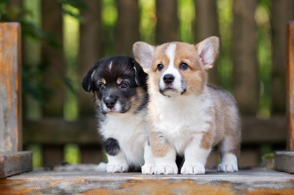 Nằm mơ thấy hai con chó cắn nhau tốt hay xấu?