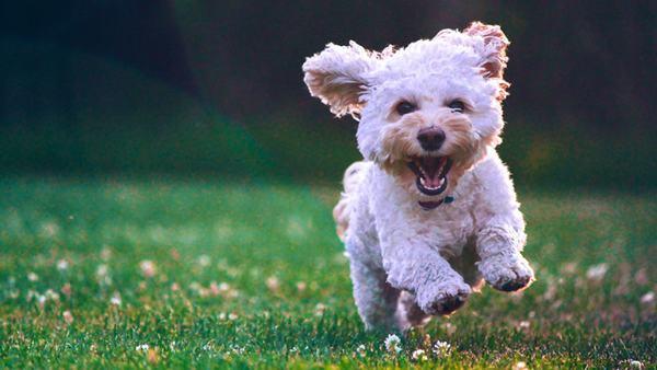 Nằm mơ thấy chó trắng đánh con gì?