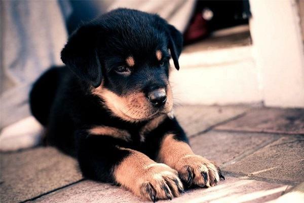 Nằm mơ thấy chó đen đánh con gì | Giải mã giấc mơ thấy chó mực mang điềm lành hay dữ?